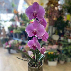 Orchidée A fleur de pot 26